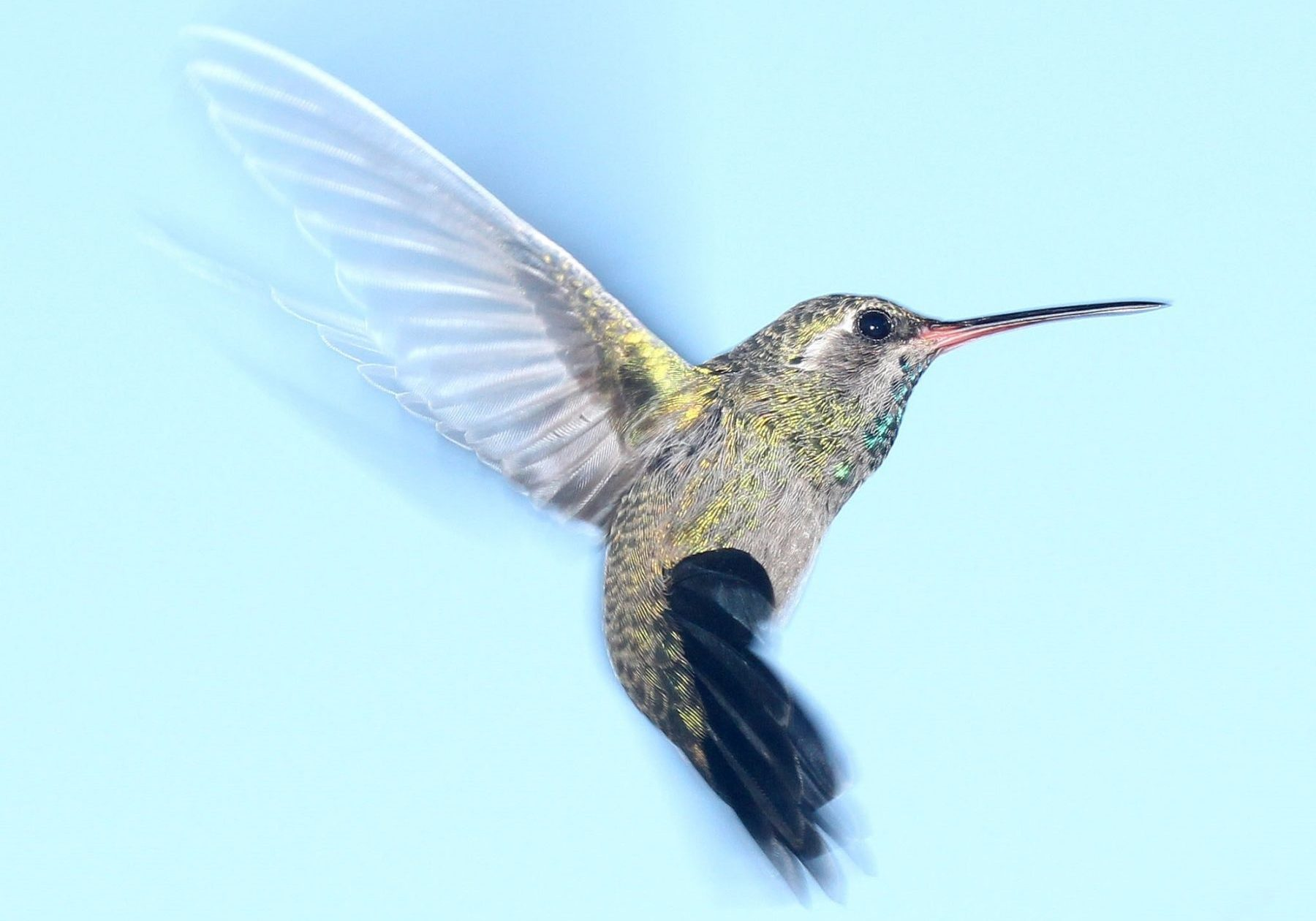 9. hummingbird-flying-portrait-wildlife